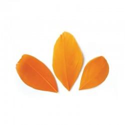 Plumes 6 cm * Orange * Sachet de 3 grammes +/- 50 plumes