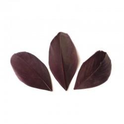 Plumes 6 cm * Marron * Sachet de 3 grammes +/- 50 plumes