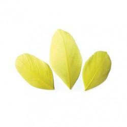 Plumes 6 cm * Jaune * Sachet de 3 grammes +/- 50 plumes