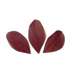 Plumes 6 cm * Bordeaux * Sachet de 3 grammes +/- 50 plumes