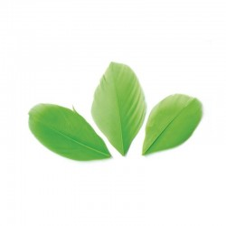 Plumes 6 cm * Vert * Sachet de 3 grammes +/- 50 plumes