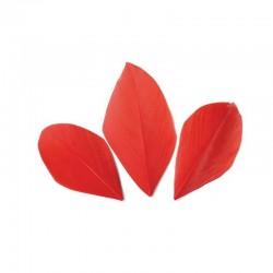 Plumes 6 cm * Rouge * Sachet de 3 grammes +/- 50 plumes